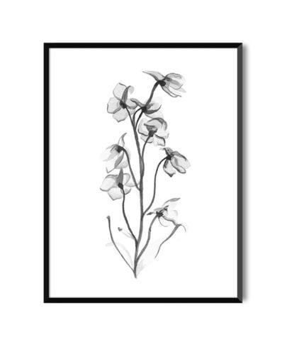 Lámina en blanco y negro flor
