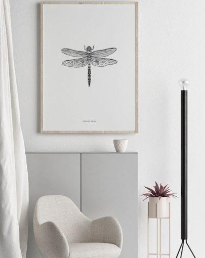 Lámina decorativa 50x70 Anisoptera de la colección Insectos decorando una estancia