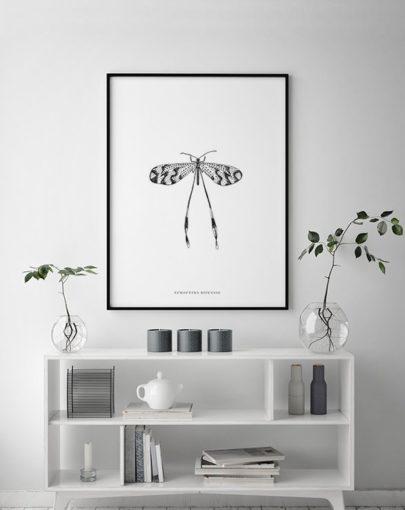 Lámina decorativa 50x70 Nemoptera Bipennis de la coleccion Insectos de Miluka decorando una estancia