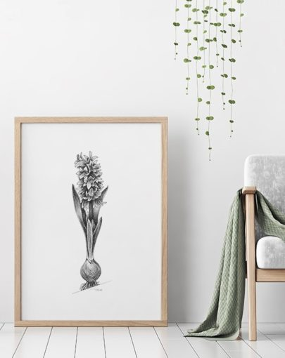 Lámina decorativa Jacinto de la colección de láminas decorativas grandes Botánica de Miluka, decorando una estancia