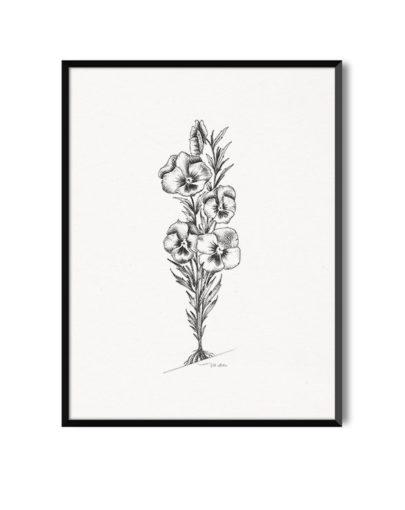 Lámina de flores Pensamientos de la colección Botánica, de láminas decorativas blanco y negro de Miluka. Lámina con marco onegro