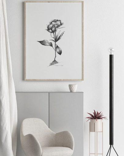Lámina Rosas de la colección de láminas decorativas flores Botánica de Miluka, decorando una estancia