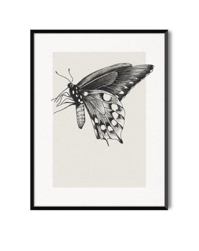 Lámina Butterfly 1 de la colección de láminas decorativas pared de la colección Butterfly con marco negro