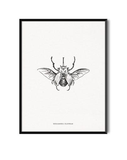 Lámina decorativa Megasoma Elephas o escarabajo elefante es una de las láminas decorativas de la colección Insectos de Miluka, con marco negro