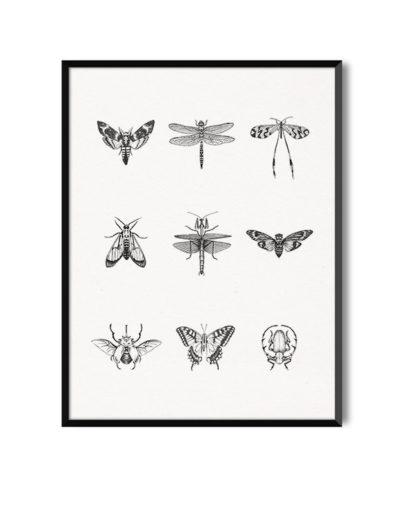 Lámina decorativa Mosaico Insectos de la colección de láminas decorativas de Miluka Insectos, con marco negro