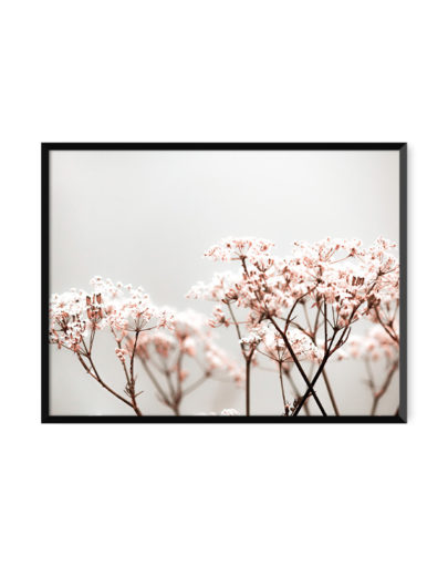 Láminas para enmarcar, lámina decorativa fotográfica Soft Rose 1 con marco negro