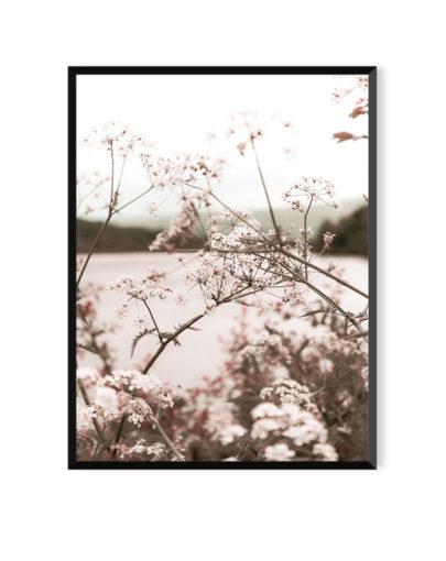 Láminas para enmarcar, lámina decorativa fotográfica Soft Rose 2 con marco negro