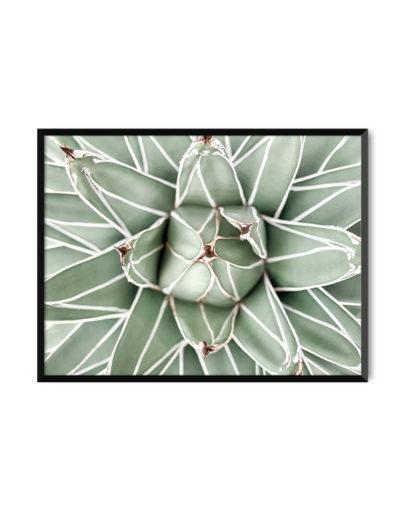 Green Lines 2 es una de las láminas de plantas de la colección Green Lines de Miluka, lámina con marco negro