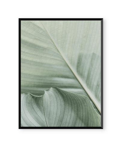 Green Lines 5 es una de las láminas de plantas de la colección Green Lines de Miluka, lámina con marco negro