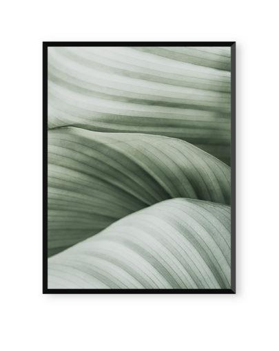 Green Lines 6 es una de las láminas de plantas de la colección Green Lines de Miluka, lámina con marco negro